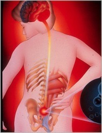 understand your back  pelvic girdle pain  diane lee